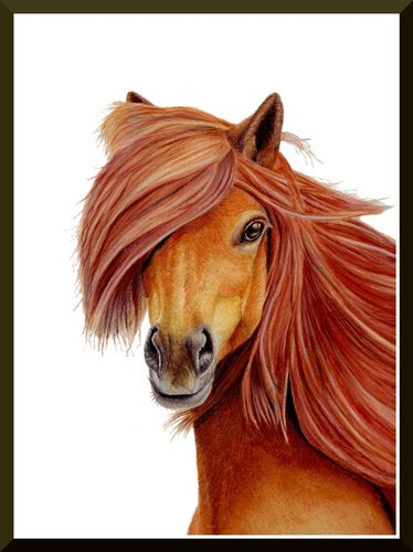 Original Colored Pencil Drawing Horse
