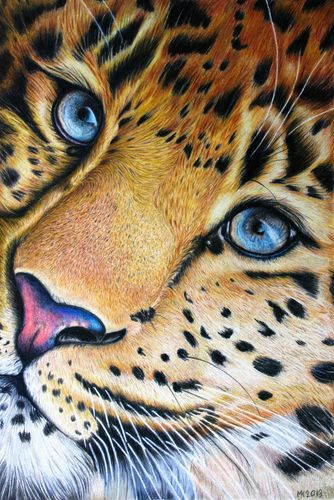 Original Wildlife Portrait Leopard