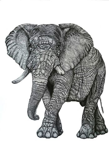 Original Ink Pencil Drawing Elephant