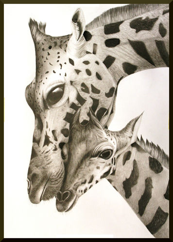 Original Graphite Pencil Drawing Giraffe DIN A2