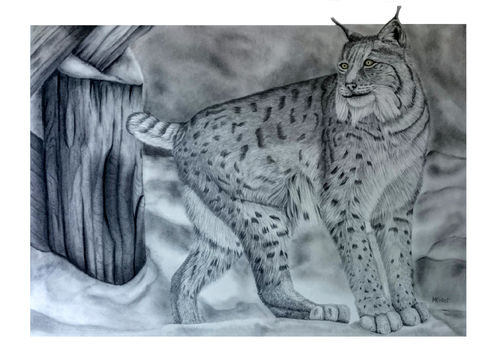 Original Graphite Pencil Drawing Lynx DIN A2