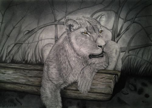 Original Graphite Pencil Drawing Lion DIN A2