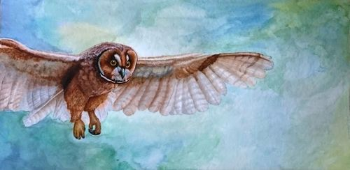 Original Mixed Media Watercolor Drawing Owl